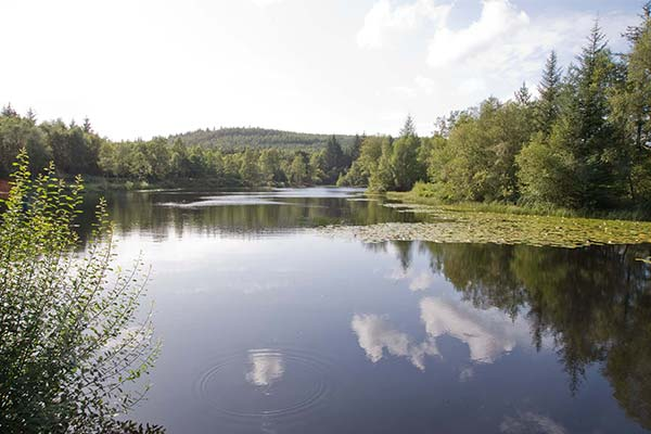 Bruntis Loch in the Galloway Forest Park © FCS